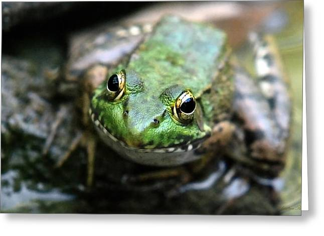 Green Frog Greeting Cards - Frog Prince Greeting Card by Christina Rollo