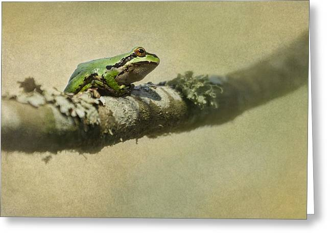 Frog Up A Tree Greeting Card by Angie Vogel