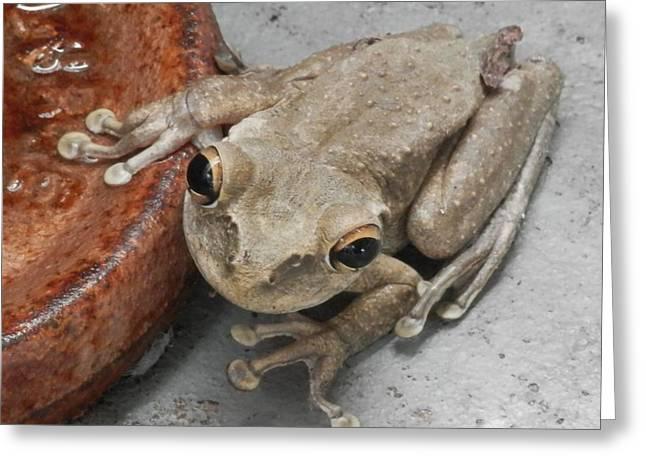 Frogs Rule Greeting Card by Belinda Lee