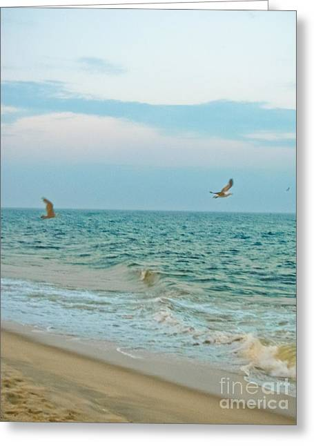 Flying Seagull Greeting Cards - Frolic Greeting Card by Colleen Kammerer
