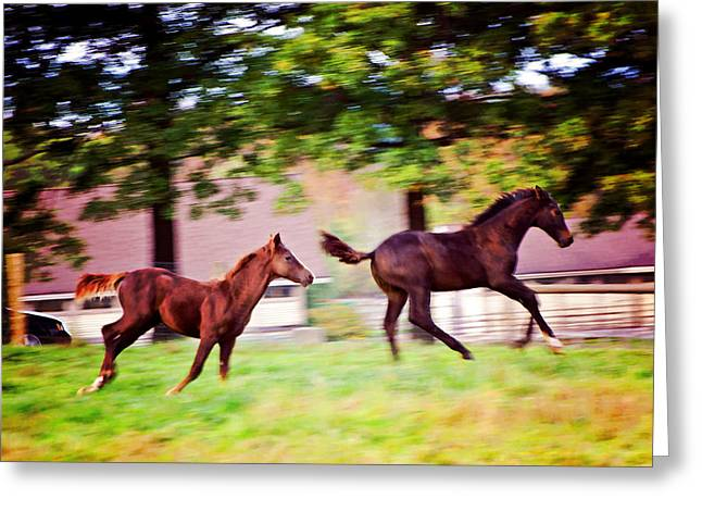 Umass Greeting Cards - Frolicking Friends Greeting Card by Donna Doherty