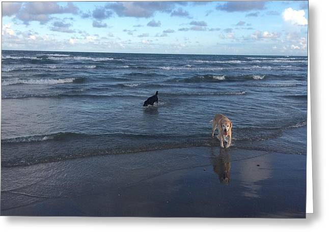 Sea Dog Prints Greeting Cards - Frolicking on the Beach Greeting Card by Kristina Deane