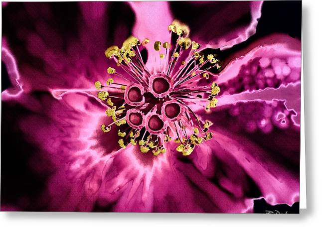 Abstractart Greeting Cards - From a Strange Garden Greeting Card by Barbara Drake