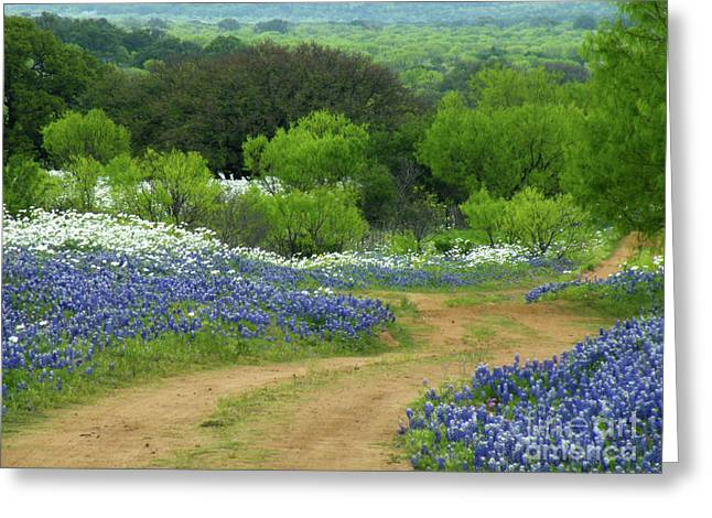 Bluebonnet Landscape Greeting Cards - From Here To There Greeting Card by Joe Jake Pratt