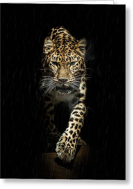 Leopard Cat Greeting Cards - From out of the darkness Greeting Card by Paul Neville
