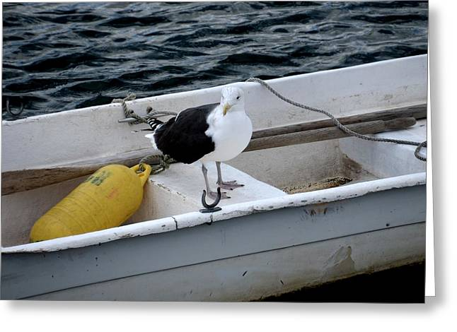 Rockport Ma Greeting Cards - From Rockport MA A seagull chilling out in a rowboat Greeting Card by Toby McGuire