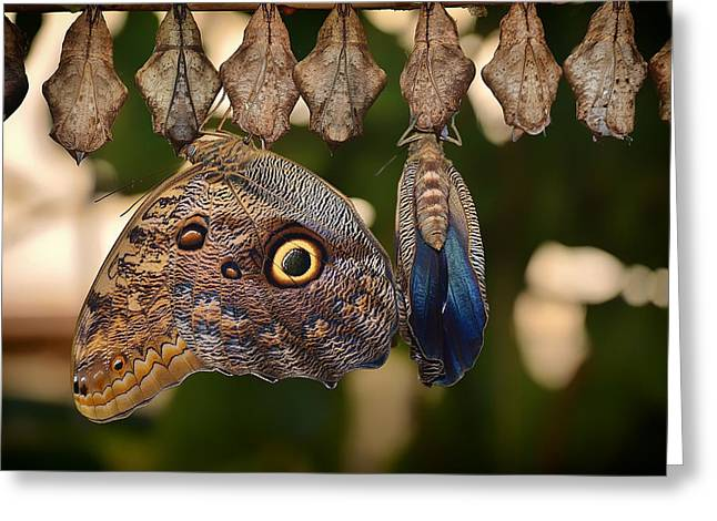 Cocoon Greeting Cards - From the Cocoon Comes Beauty Greeting Card by Mountain Dreams