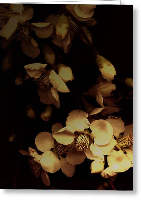 Ecru And Brown Greeting Cards - From the Darkness Into the Light Greeting Card by Ann Powell
