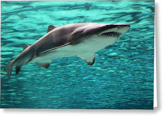 From the Deep II Greeting Card by Suzanne Gaff