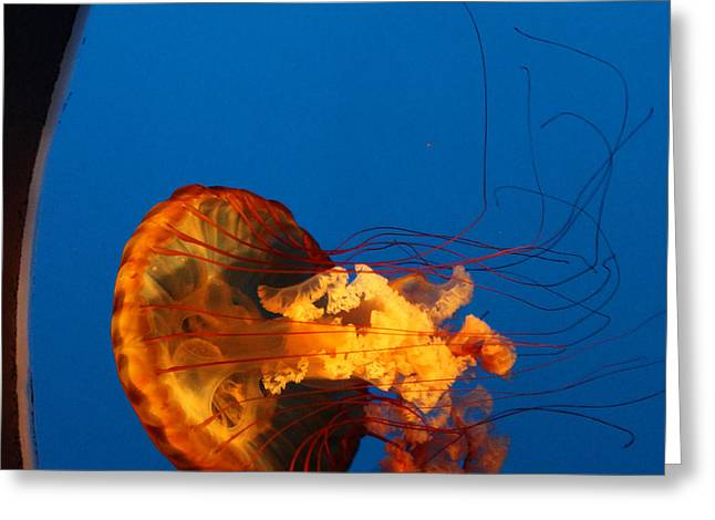 Jelly Fish Greeting Cards - From the Deep - Jelly Fish Greeting Card by Suzanne Gaff