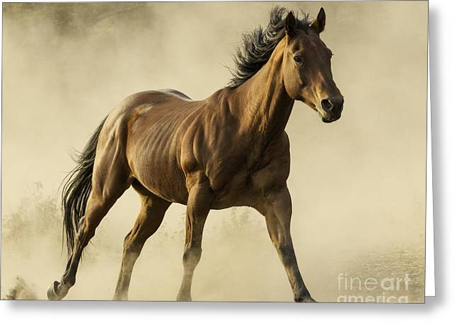 Brown Horse Photographs Greeting Cards - From the Dust Greeting Card by Carol Walker