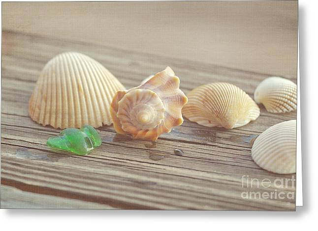 Sea Shell Art Greeting Cards - From The Sea Greeting Card by Kay Pickens