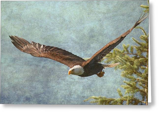 Eagle In Flight Greeting Cards - From the Tree Tops Greeting Card by Angie Vogel