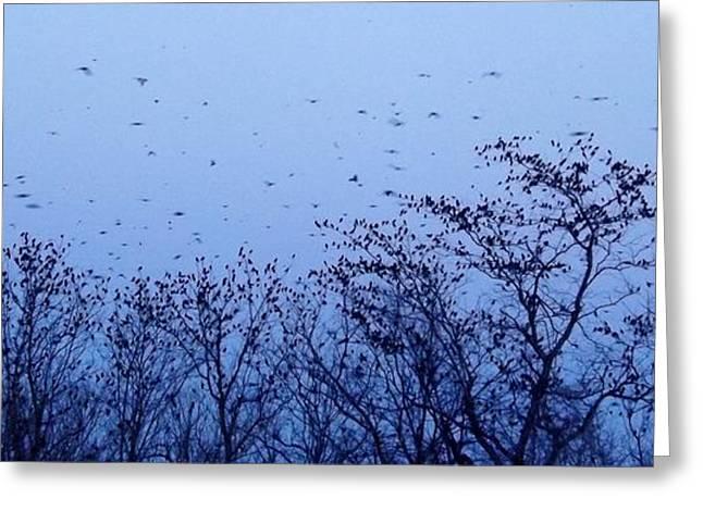 Bird Summit Greeting Cards - From the Treetops indigo Greeting Card by Elizabeth Sullivan