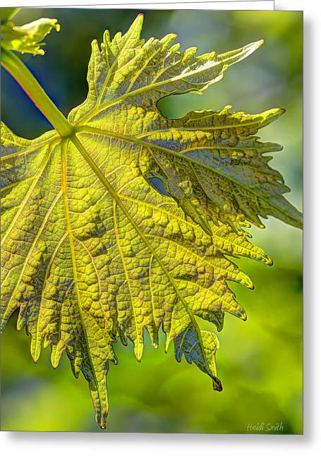 Vineyard Art Greeting Cards - From The Vine Greeting Card by Heidi Smith