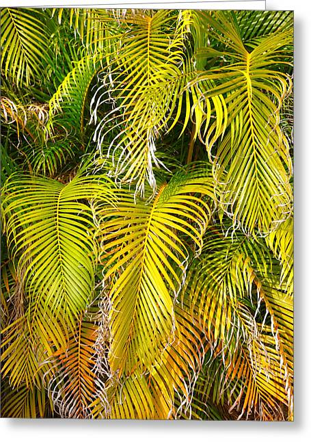 Flora Framed Prints Greeting Cards - Frond Colors and Patterns Greeting Card by Steven Ainsworth