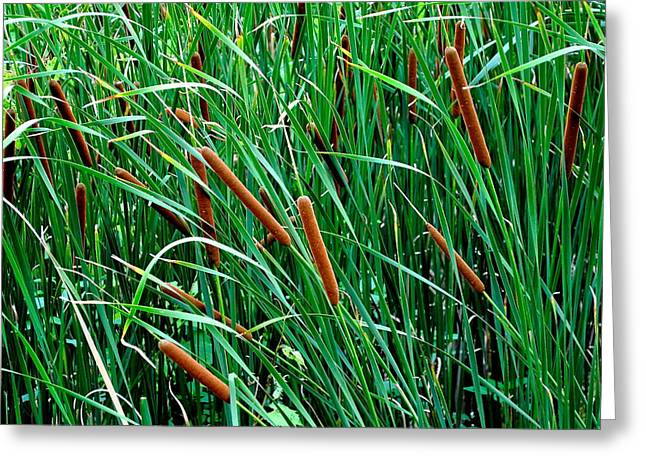Tadpole Greeting Cards - Fronds Greeting Card by Frozen in Time Fine Art Photography
