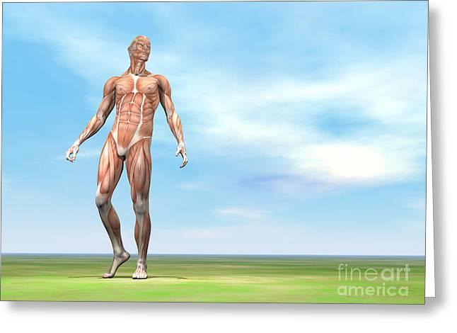 Physical Body Digital Greeting Cards - Front View Of Male Musculature Walking Greeting Card by Elena Duvernay
