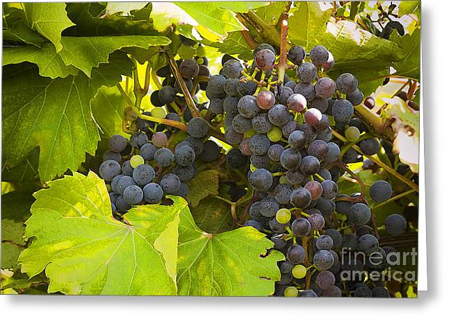 Blue Grapes Photographs Greeting Cards - Frontenac Grapes Greeting Card by Jan Tyler