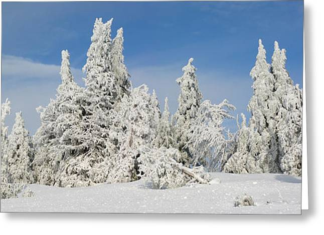 Crater Lake National Park Greeting Cards - Frost And Ice On Trees In Midwinter Greeting Card by Panoramic Images