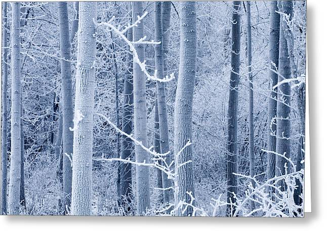 Matsu Greeting Cards - Frost Coated Birch Forest Near Knik Greeting Card by Carl R. Battreall