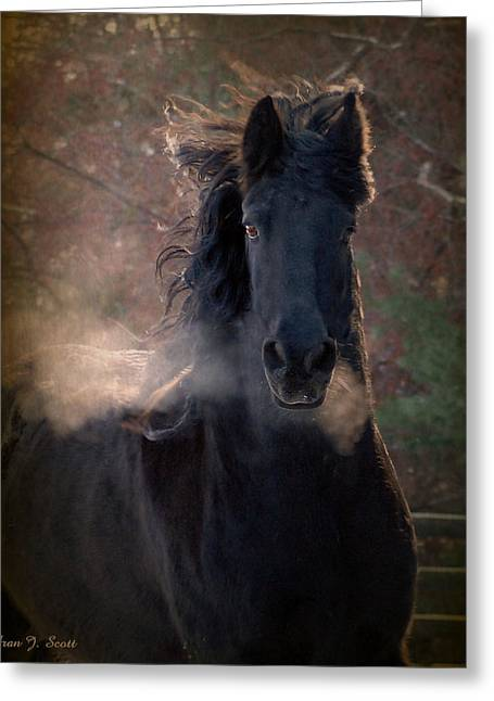 Horse Prints Greeting Cards - Frost Greeting Card by Fran J Scott