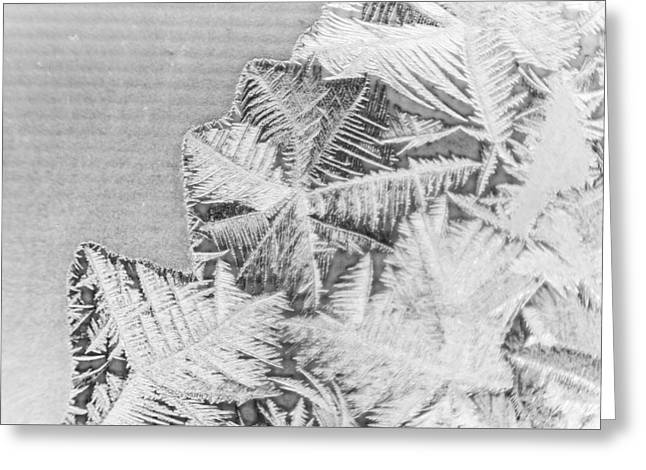 Frost In Black And White Greeting Card by Dana Moyer
