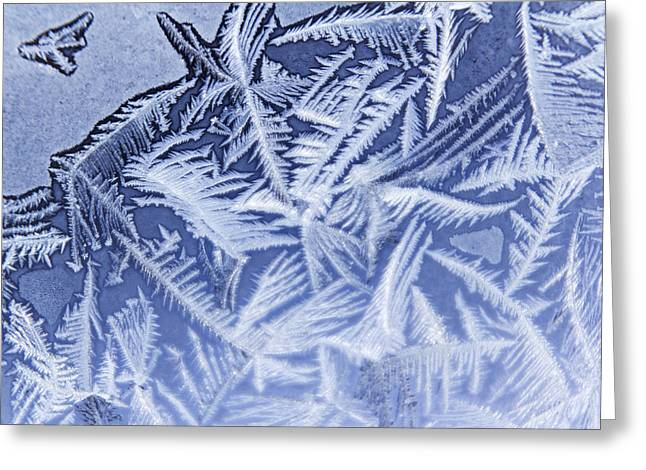 Frost In Blue Greeting Card by Dana Moyer