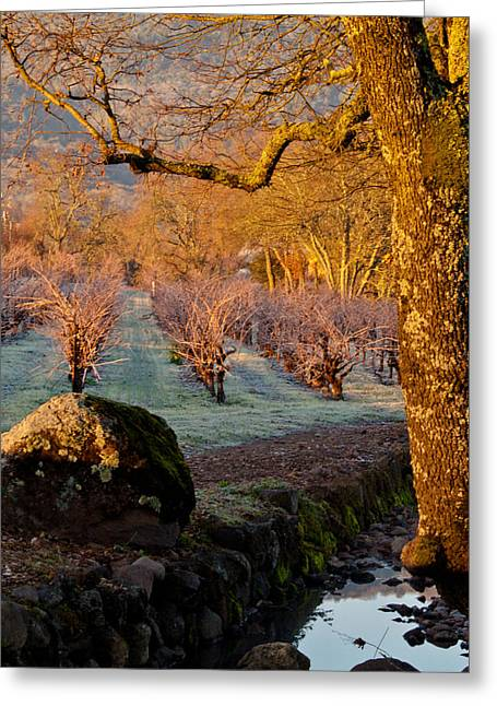 Oak Creek Greeting Cards - Frost in the Valley Of the Moon Greeting Card by Bill Gallagher
