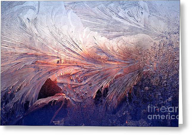 Cold Morning Sun Greeting Cards - Frost on a Windowpane at Sunrise Greeting Card by Thomas R Fletcher