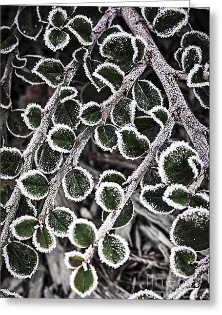 Floral Structure Greeting Cards - Frost on plant branch in late fall Greeting Card by Elena Elisseeva