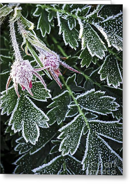 Floral Structure Greeting Cards - Frost on plants in late fall Greeting Card by Elena Elisseeva