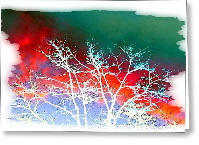 Shroud Digital Greeting Cards - Frost Shrouded Tree Greeting Card by Will Borden