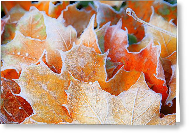 Autumn Prints Greeting Cards - Frost Touched Greeting Card by Theresa Tahara