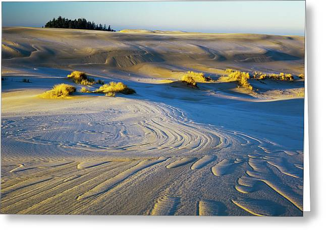 Frost Turns The Sand White Greeting Card by Robert L. Potts