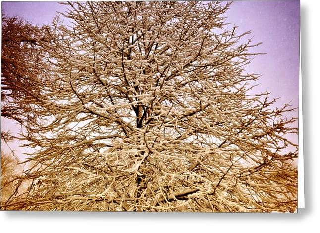 Frosted Branches Greeting Card by Marty Koch