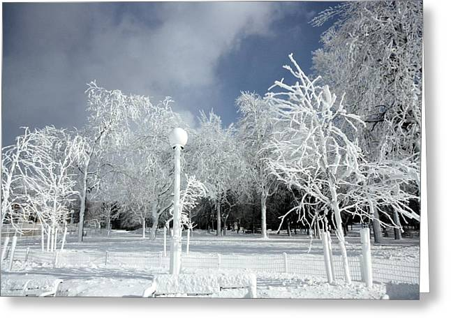 Snow-covered Landscape Greeting Cards - Frosted Greeting Card by Gothicolors Donna Snyder