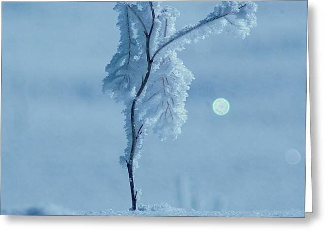 Hoar Frost Greeting Cards - Frosted Greeting Card by Jeff  Swan