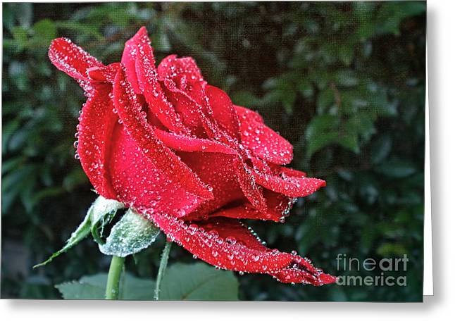 Frosted Greeting Card by Kaye Menner