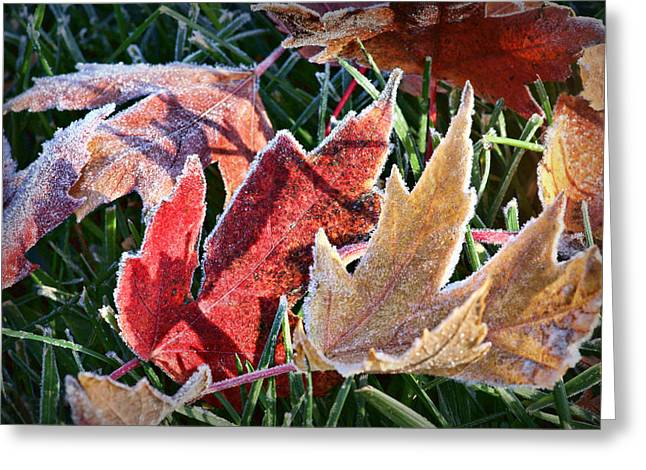 Fallen Leaf Greeting Cards - Frosted Leaves #1 Greeting Card by Nikolyn McDonald