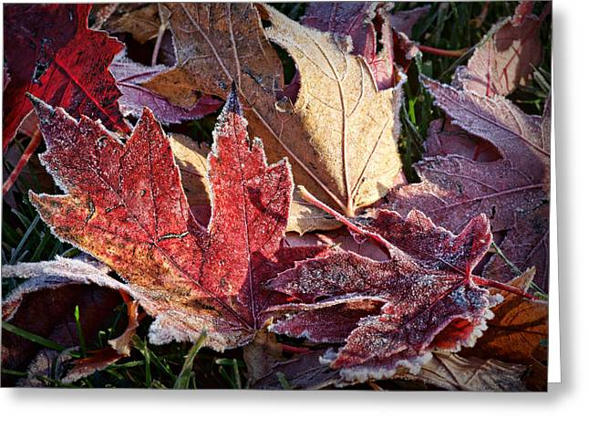 Fallen Leaf Greeting Cards - Frosted Leaves #2 Greeting Card by Nikolyn McDonald