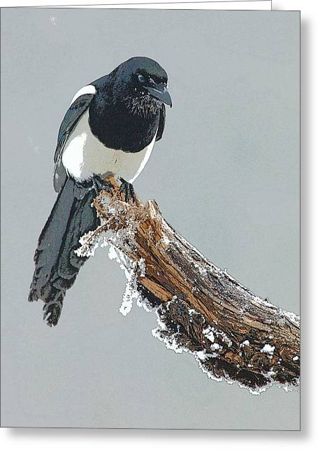 Magpies Greeting Cards - Frosted Magpie- Abstract Greeting Card by Tim Grams