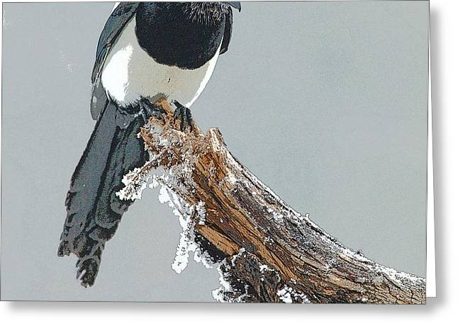 Frosted Magpie- Abstract Greeting Card by Tim Grams
