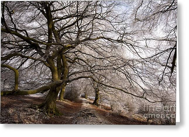 Wintry Photographs Greeting Cards - Frosted Path Greeting Card by Anne Gilbert