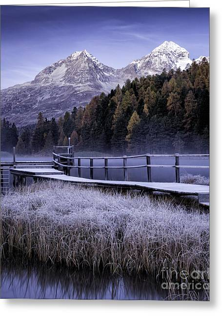 Pontresina Greeting Cards - Frosted Reeds Greeting Card by Timothy Hacker