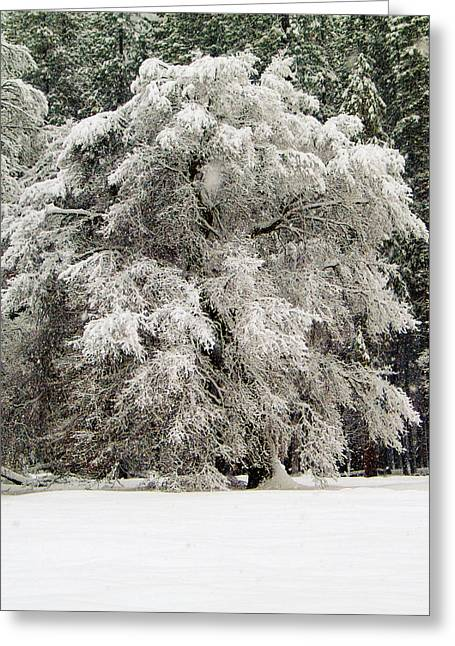 Wintry Greeting Cards - Frosty Greeting Card by Bill Gallagher