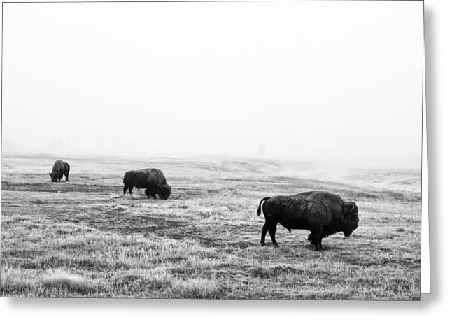 Yellowstone National Park Greeting Cards - Frosty Bison Greeting Card by Mark Kiver