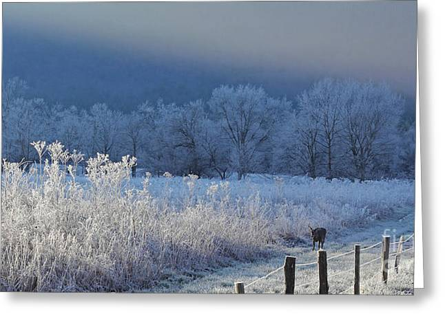 Frosty Cades Cove Shoot Greeting Card by Douglas Stucky