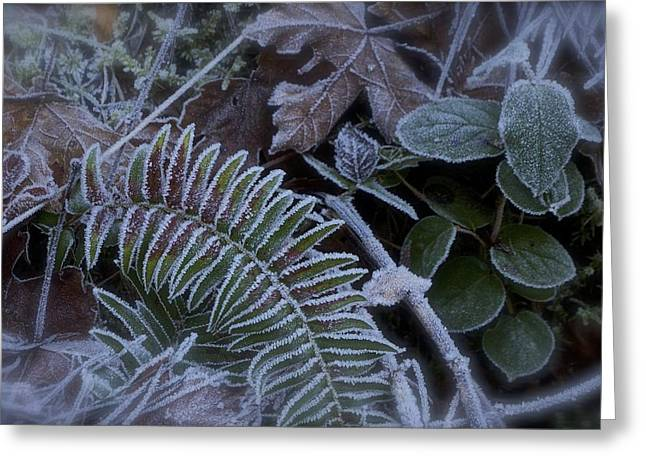 Frosty Day  Greeting Card by Tim Rice