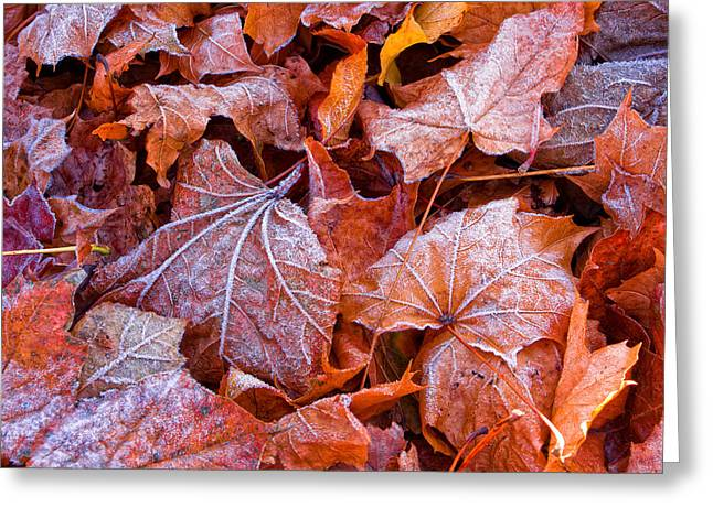 Crisp Greeting Cards - Frosty Fallen Greeting Card by Jeff Sinon